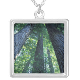Montgomery Woods State Reserve, California. Silver Plated Necklace