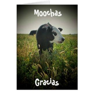Moochas Gracias Greeting Cards