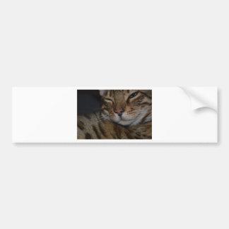 Moody Bengal Cat Bumper Sticker