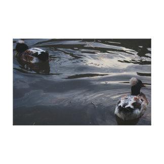 Moody Duck Photo Canvas Print