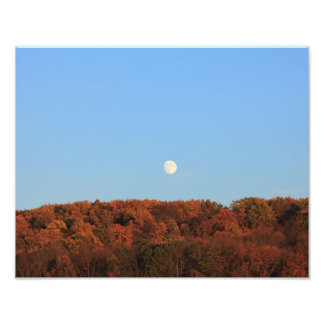 moon above the trees photo