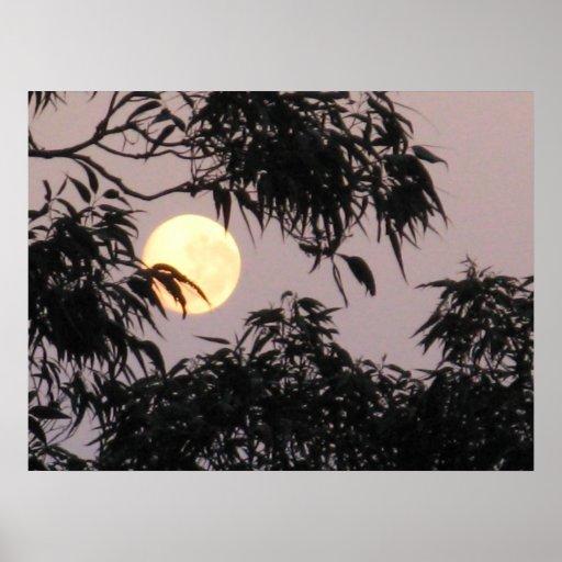 Moon behind gum trees print