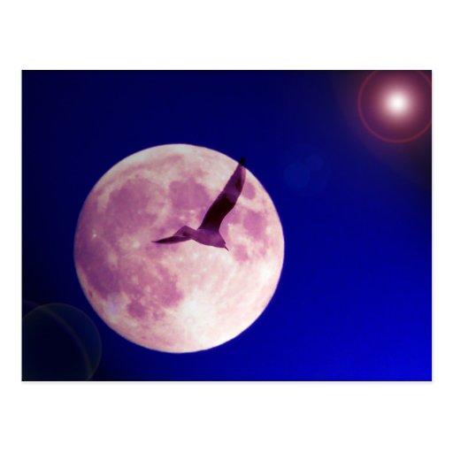 Moon bird postcard