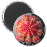 Moon cactus magnet