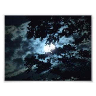 Moon Illuminates the Night behind Tree Branches Photo Print