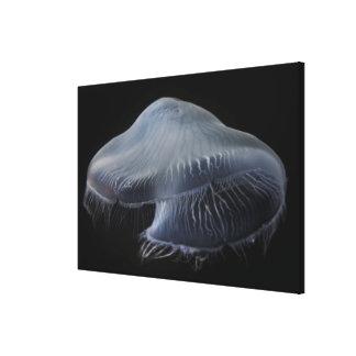 Moon Jellyfish Floating Canvas Print