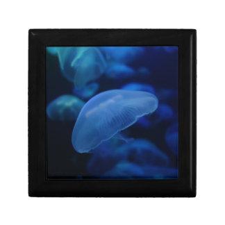 Moon Jellyfish Gift Box