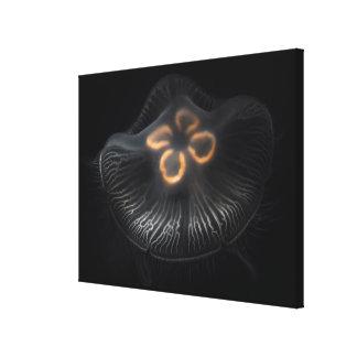 Moon Jellyfish Outline Canvas Print