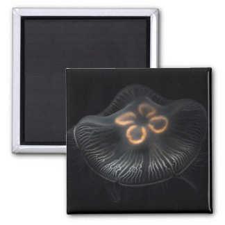 Moon Jellyfish Outline Magnet