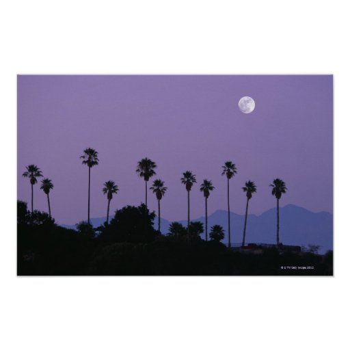 Moon over palm trees at dusk, Hollywood Posters