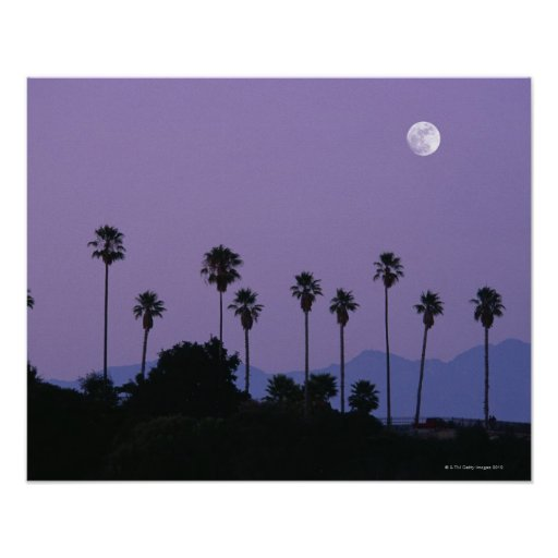 Moon over palm trees at dusk, Hollywood Print