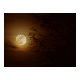 Moon Through the Trees Posters