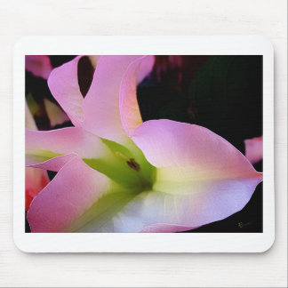 Moonflower Bloomaing Mouse Pad
