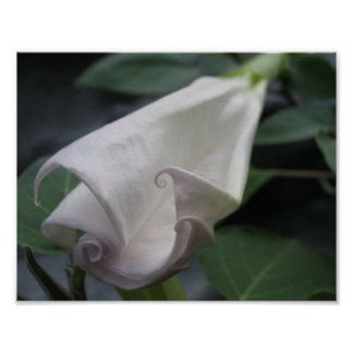Moonflower Posters