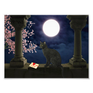 Moonlight Kitty Art Photo
