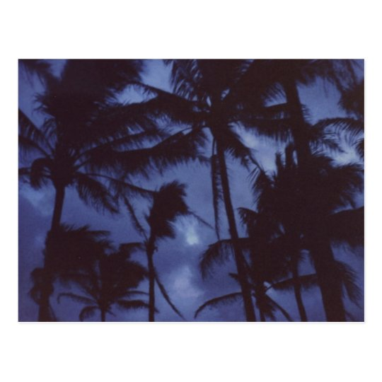 Moonlight PalmTrees Postcard