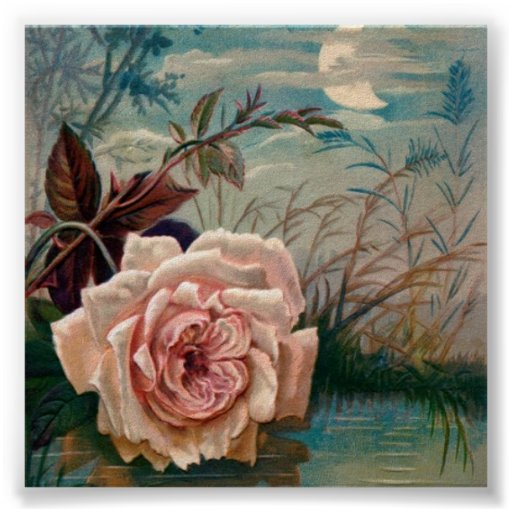 Moonlight Rose Serenade Poster