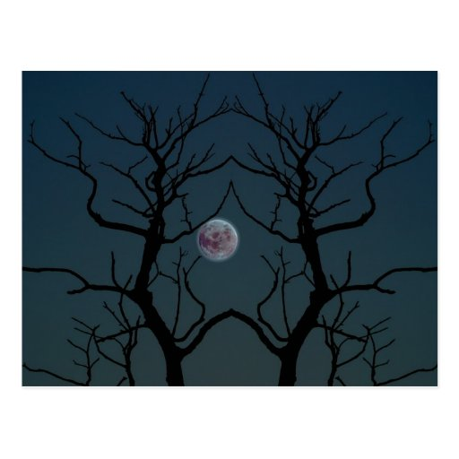 Moonlight Tree Silhouette Post Cards