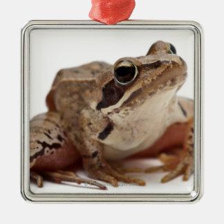 Moor Frog - Rana arvalis Christmas Ornament