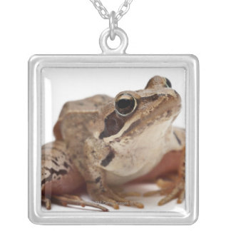 Moor Frog - Rana arvalis Silver Plated Necklace