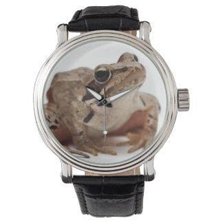 Moor Frog - Rana arvalis Watch