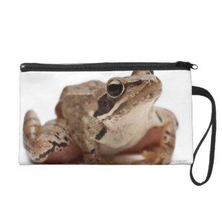 Moor Frog - Rana arvalis Wristlet