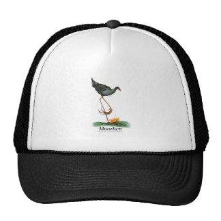 Moorhen bird, tony fernandes cap