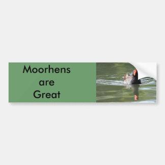 Moorhen Bumper Stickers