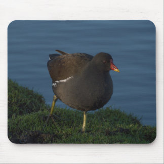 Moorhen Mouse Pad