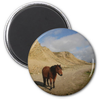 Moorland Pony Magnet