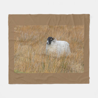 Moorland sheep blanket