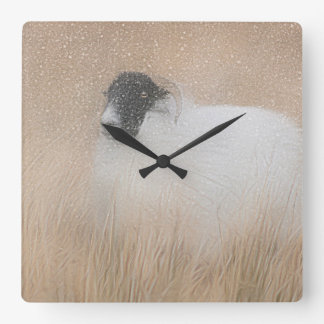 Moorland sheep photograph clock