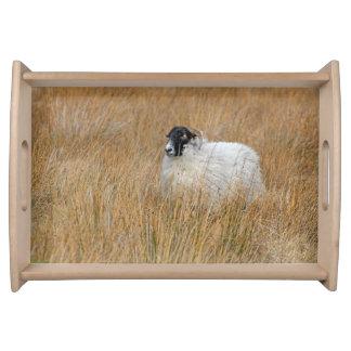 Moorland sheep photograph serving tray
