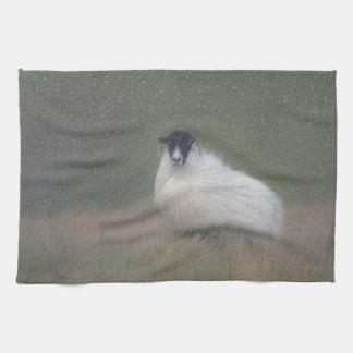 Moorland sheep photograph towel
