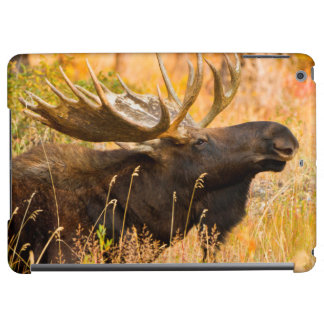 Moose (Alces Alces) Bull In Golden Willows