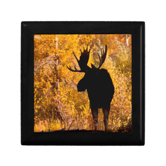 Moose (Alces Alces) Bull In Golden Willows 2 Gift Box