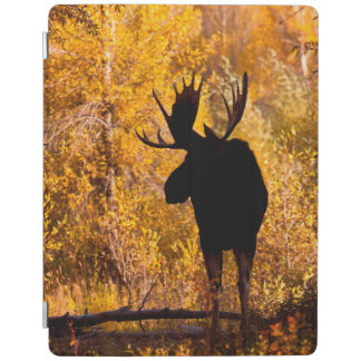 Moose (Alces Alces) Bull In Golden Willows 2 iPad Cover