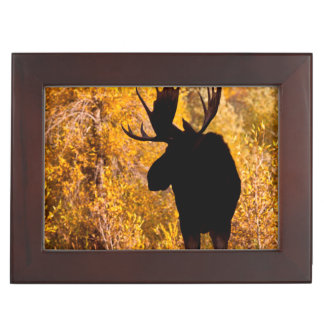 Moose (Alces Alces) Bull In Golden Willows 2 Keepsake Box
