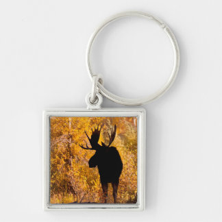 Moose (Alces Alces) Bull In Golden Willows 2 Key Ring