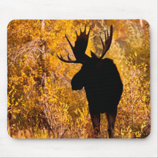Moose (Alces Alces) Bull In Golden Willows 2 Mouse Mat
