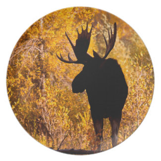 Moose (Alces Alces) Bull In Golden Willows 2 Plate