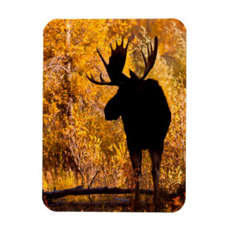 Moose (Alces Alces) Bull In Golden Willows 2 Rectangular Photo Magnet