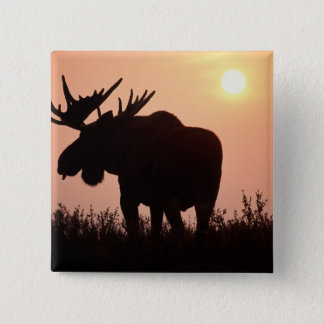 moose, Alces alces, bull with large antlers, 15 Cm Square Badge