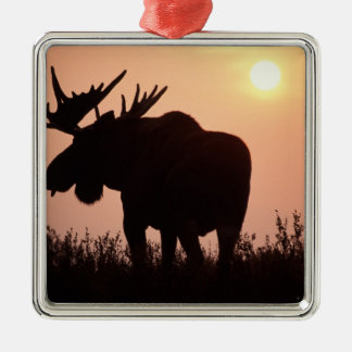 moose, Alces alces, bull with large antlers, Christmas Ornament
