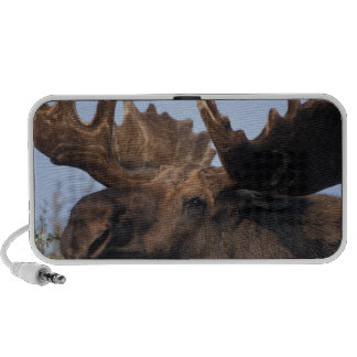 moose, Alces alces, bull with large antlers in 2 iPod Speaker