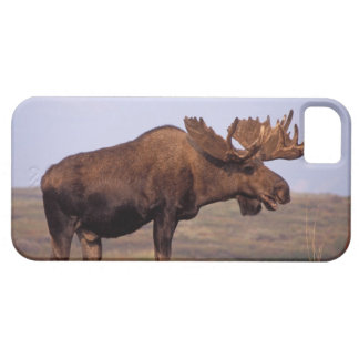 moose, Alces alces, bull with large antlers in Barely There iPhone 5 Case
