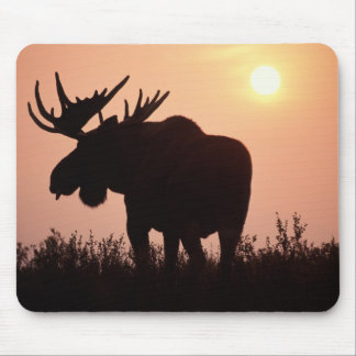 moose, Alces alces, bull with large antlers, Mouse Mat