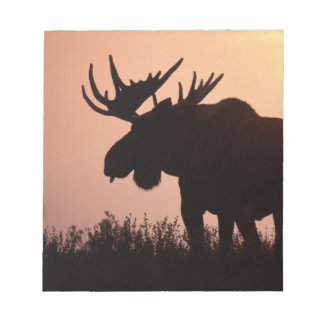 moose, Alces alces, bull with large antlers, Notepad