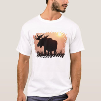 moose, Alces alces, bull with large antlers, T-Shirt