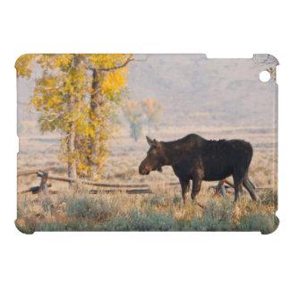 Moose (Alces Alces) Cow In Sage Brush iPad Mini Cover